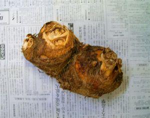 里芋の親_2.jpg